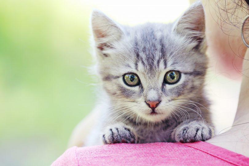 pisica te protejeaza de energiile negative