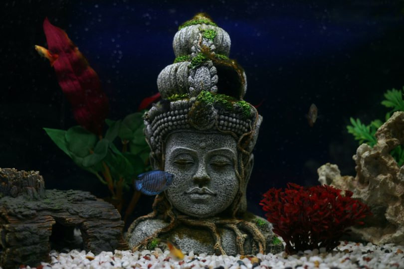 legi spirituale calugar budist
